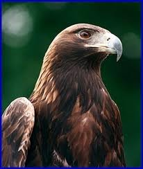 Eagle_